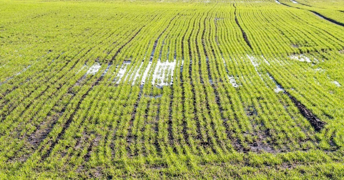 Översvämningarna hotar jordbruket